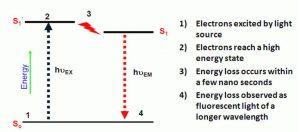 Inov8 olio in acqua schema fluorescenza